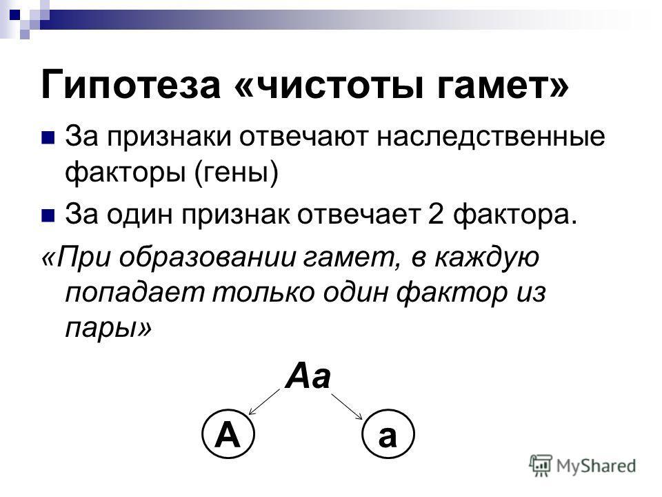 Гипотеза «чистоты гамет» За признаки отвечают наследственные факторы (гены) За один признак отвечает 2 фактора. «При образовании гамет, в каждую попадает только один фактор из пары» Аа Аа