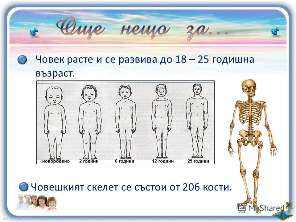 Човек расте и се развива до 18 – 25 годишна възраст. Човешкият скелет се състои от 206 кости.