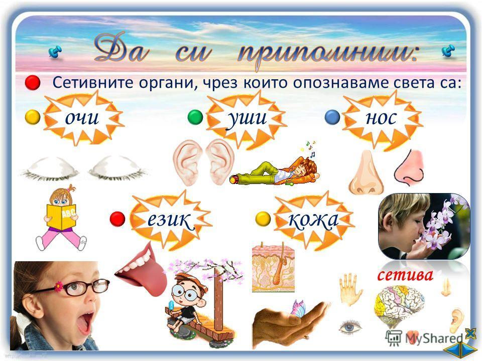 Сетивните органи, чрез които опознаваме света са: очи уши нос език кожа сетива