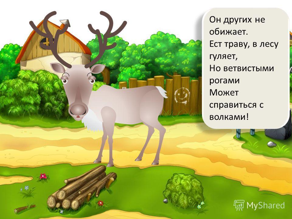 Он других не обижает. Ест траву, в лесу гуляет, Но ветвистыми рогами Может справиться с волками!
