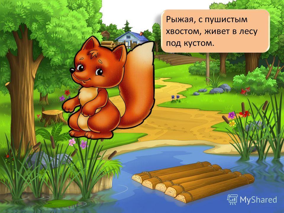 Рыжая, с пушистым хвостом, живет в лесу под кустом.