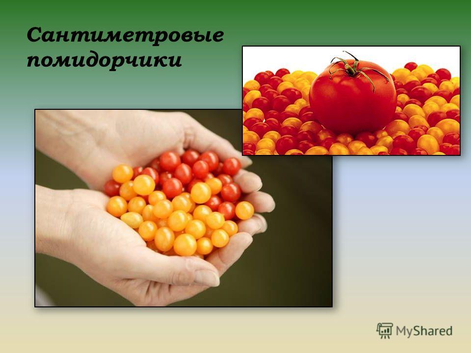Сантиметровые помидорчики