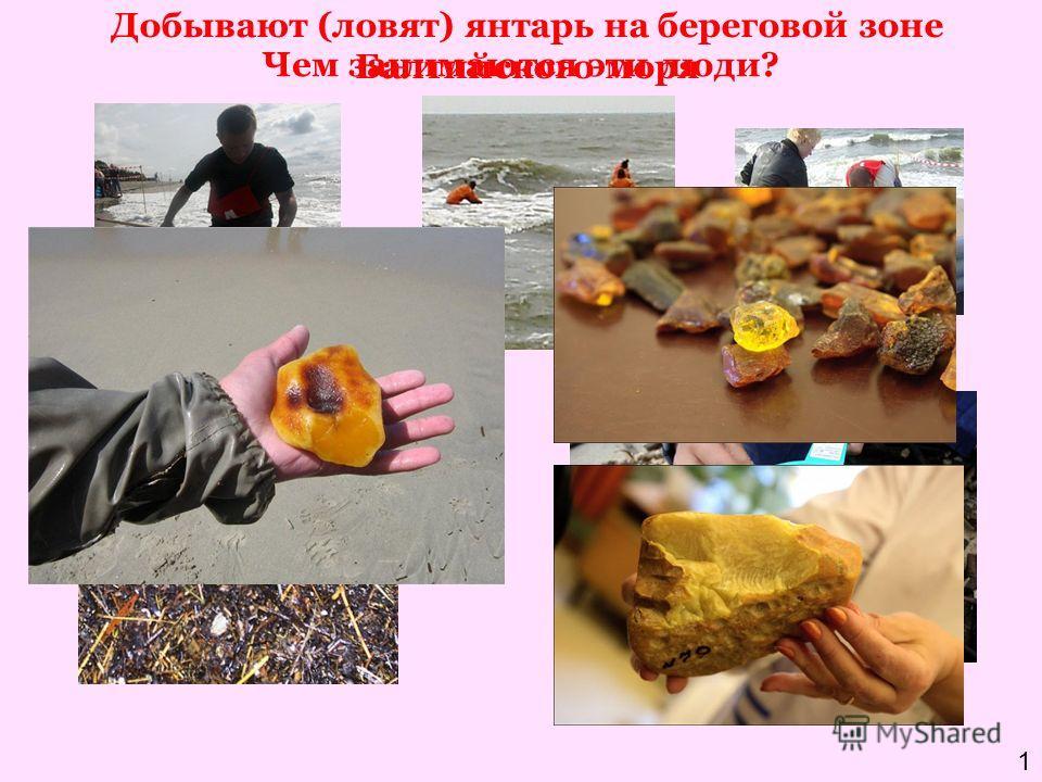 Чем занимаются эти люди? Добывают (ловят) янтарь на береговой зоне Балтийского моря 1