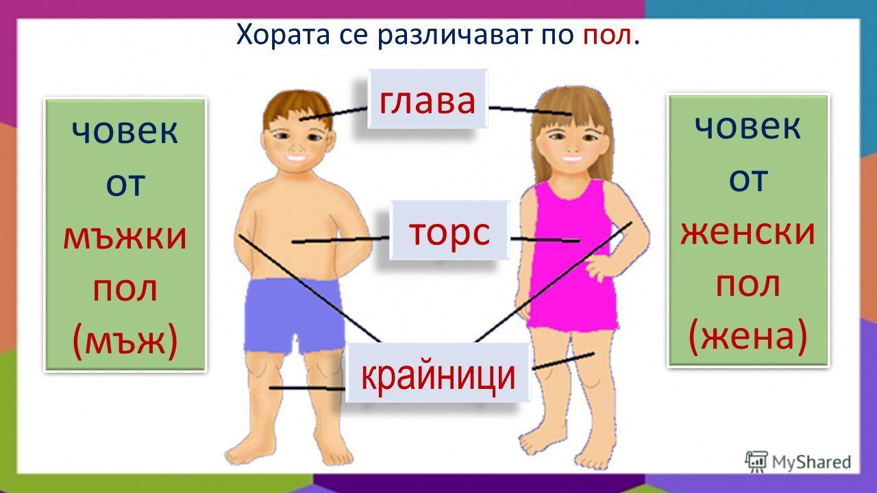 глава торс крайници Хората се различават по пол. човек от мъжки пол (мъж) човек от мъжки пол (мъж) човек от женски пол (жена) човек от женски пол (жена)