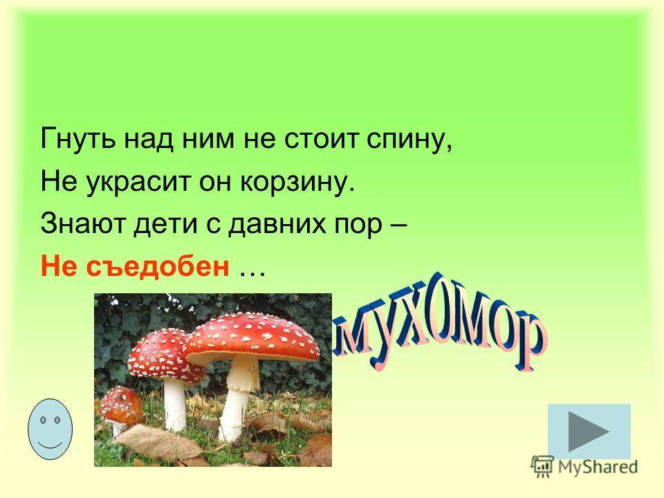 Нет грибов дружней, чем эти. Знают взрослые и дети – На пеньках растут в лесу, Как веснушки на носу.