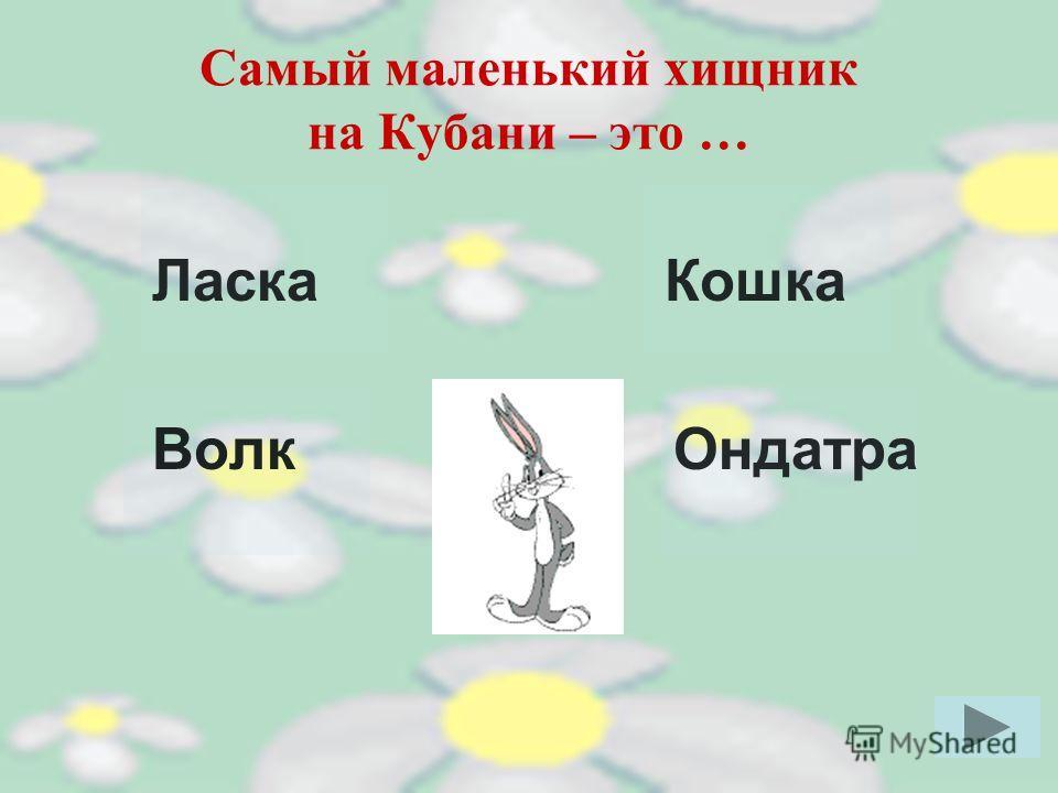 Для чего зайцу длинные уши? Чтобы слышать. Чтобы управлять движением при быстром беге. Чтобы потеть. Для красоты. Кликни мышкой на правильный ответ Перейди к следующему вопросу