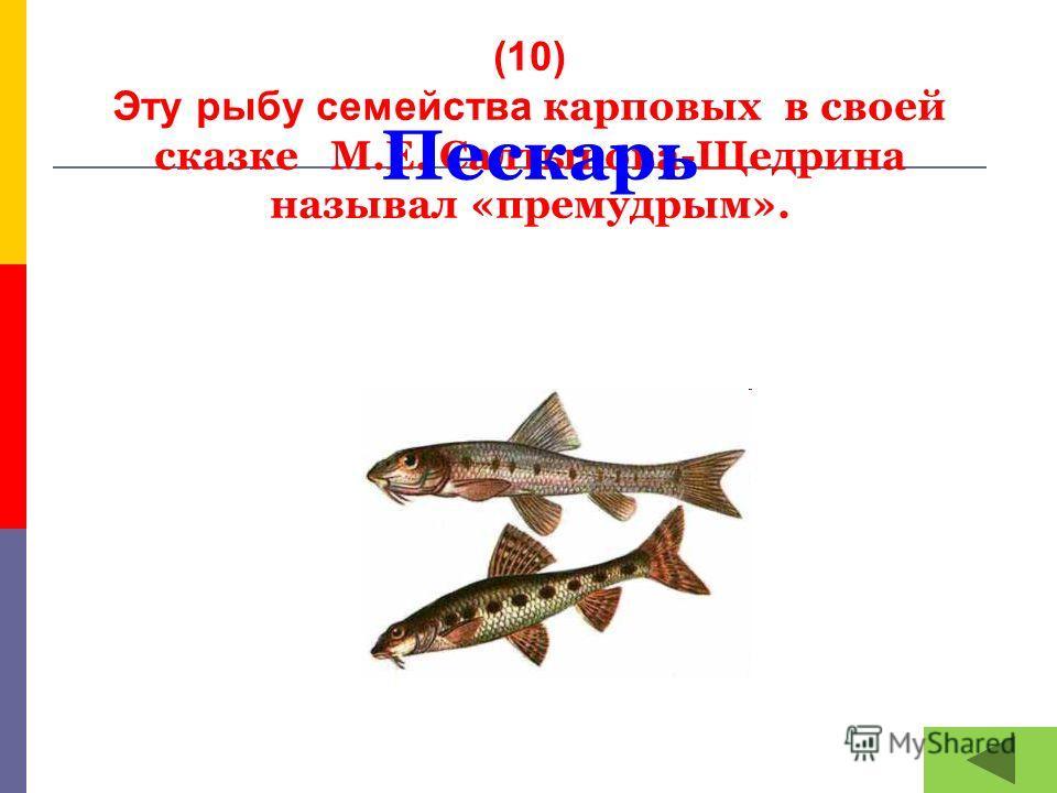 (10) Эту рыбу семейства карповых в своей сказке М.Е. Салтыкова-Щедрина называл «премудрым». Пескарь