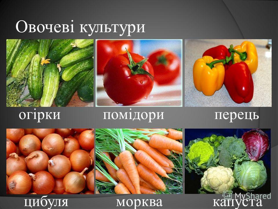 Овочеві культури огірки помідори перець цибуля морква капуста