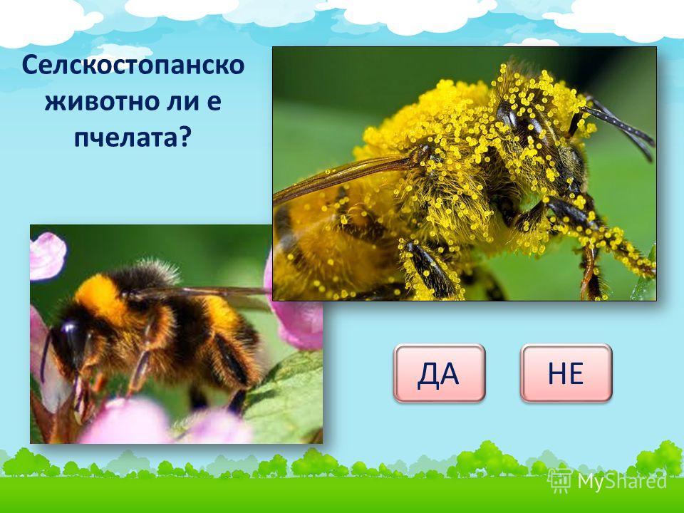 Селскостопанско животно ли е пчелата? ДА НЕ