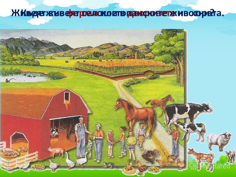 Живеят във ферми или в дворовете на хората.Къде живеят селскостопанските животни?