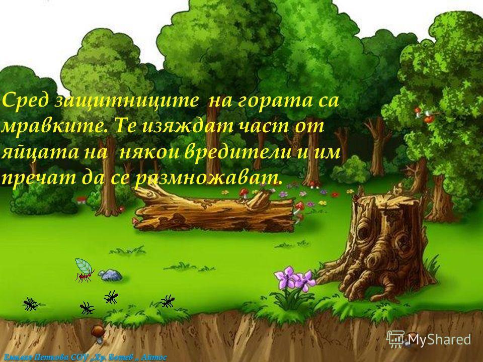 В горите се срещат и много вредители - например бръмбарът корояд, който преяжда стеблата и клоните на дърветата.