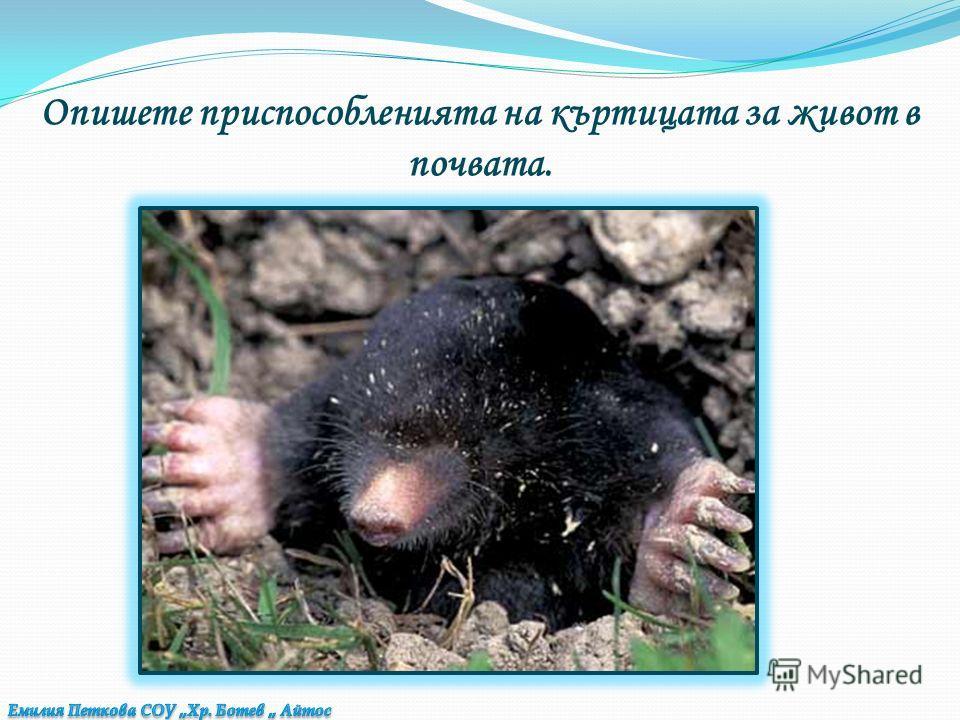Подреди животните в две колонки: Полезни за човека : Вредители : колорадски бръмбарполска мишка лалугер пъдпъдъкбръмбар корояд мравка