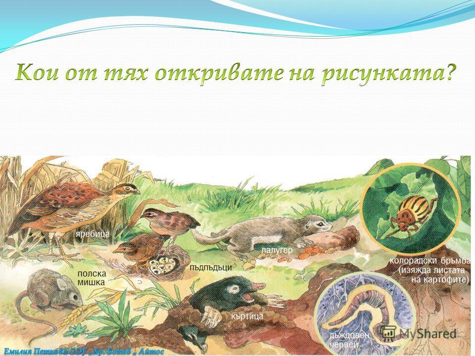 Други са се приспособили да живеят на сушата – например в почвата, в равнините или в планините.
