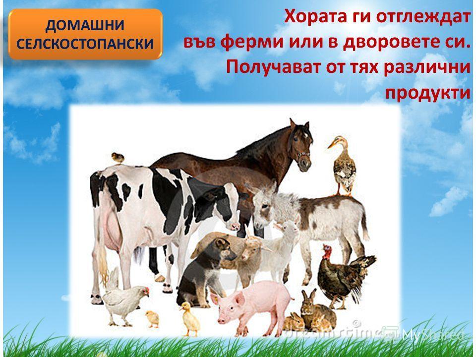 Хората ги отглеждат във ферми или в дворовете си. Получават от тях различни продукти ДОМАШНИ СЕЛСКОСТОПАНСКИ ДОМАШНИ СЕЛСКОСТОПАНСКИ