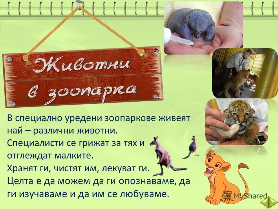 Животни в зоопарка В специално уредени зоопаркове живеят най – различни животни. Специалисти се грижат за тях и отглеждат малките. Хранят ги, чистят им, лекуват ги. Целта е да можем да ги опознаваме, да ги изучаваме и да им се любуваме.