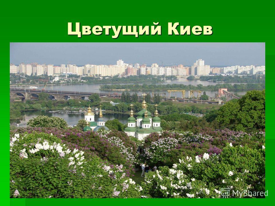 Цветущий Киев