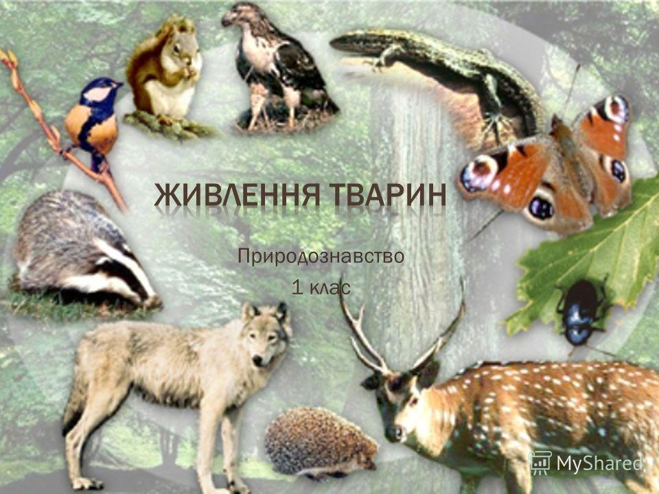 Природознавство 1 клас