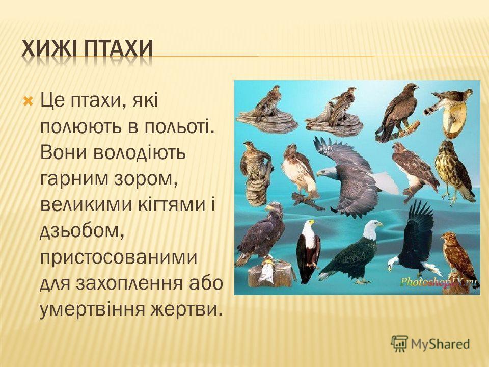 Це птахи, які полюють в польоті. Вони володіють гарним зором, великими кігтями і дзьобом, пристосованими для захоплення або умертвіння жертви.