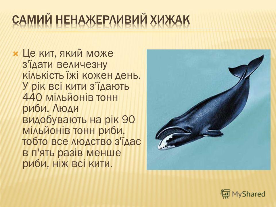Це кит, який може з'їдати величезну кількість їжі кожен день. У рік всі кити зїдають 440 мільйонів тонн риби. Люди видобувають на рік 90 мільйонів тонн риби, тобто все людство з'їдає в п'ять разів менше риби, ніж всі кити.
