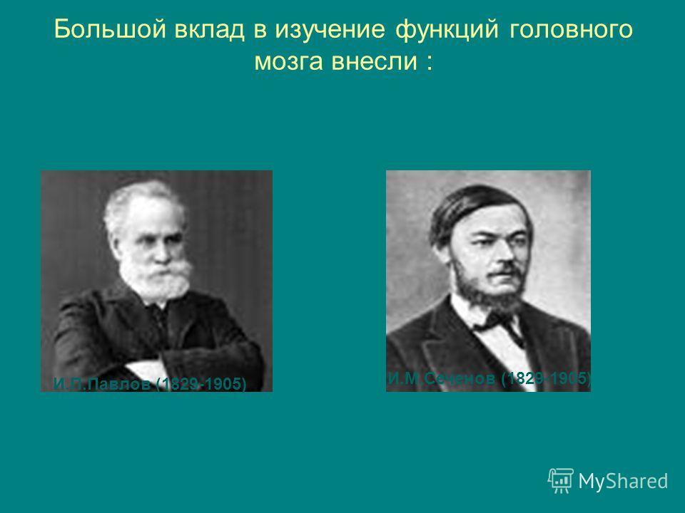 Большой вклад в изучение функций головного мозга внесли : И.П.Павлов (1829-1905) И.М.Сеченов (1829-1905)