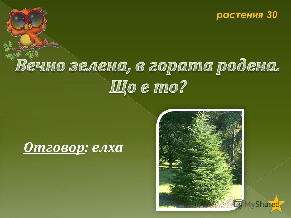 растения 30 Отговор: елха