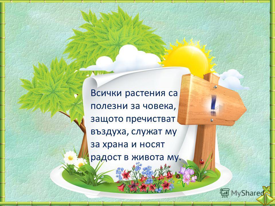 Всички растения са полезни за човека, защото пречистват въздуха, служат му за храна и носят радост в живота му.