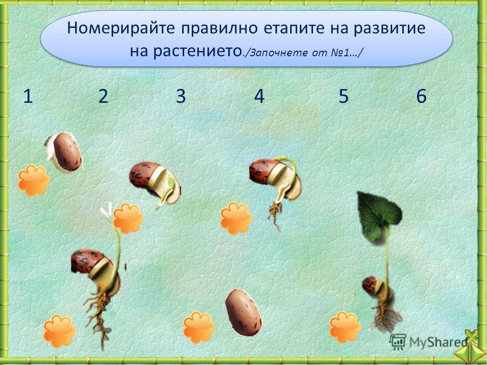 Номерирайте правилно етапите на развитие на растението./Започнете от 1…/ Номерирайте правилно етапите на развитие на растението./Започнете от 1…/ 123456