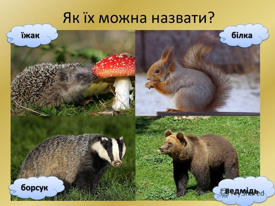 Хто такі звірі? Природознавство 1 клас