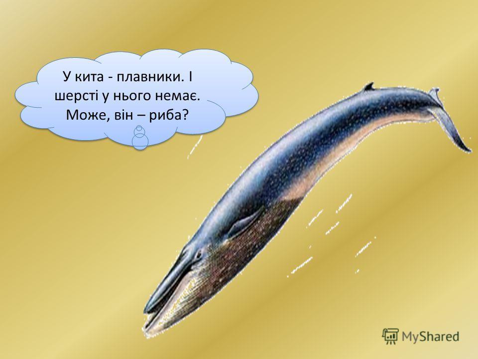 дельфіндельфін