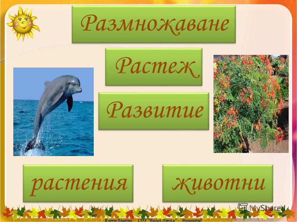 Размножаване Растеж Развитие растения животни