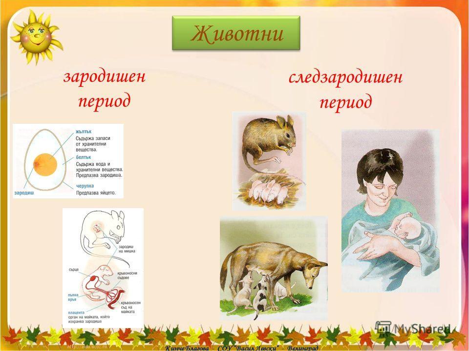 Животни зародишен период следзародишен период