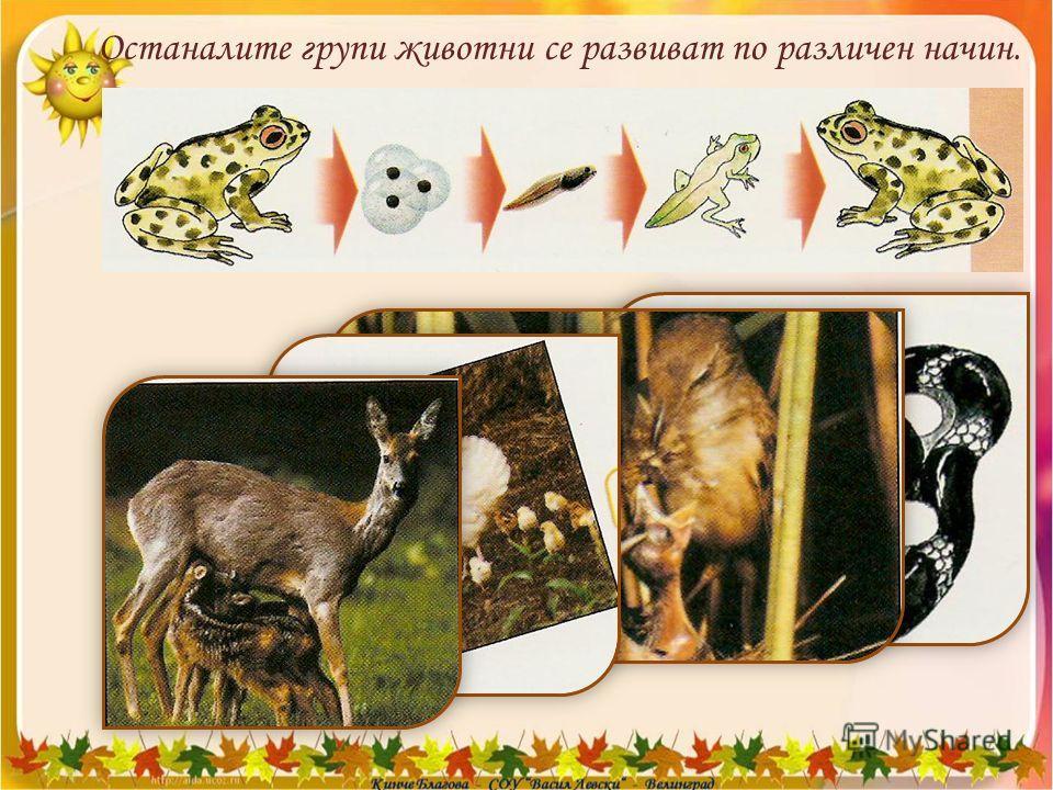 Останалите групи животни се развиват по различен начин.