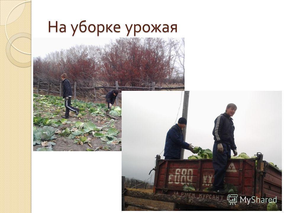 На уборке урожая