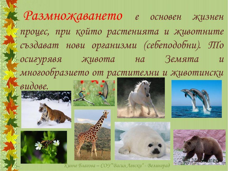 Размножаването е основен жизнен процес, при който растенията и животните създават нови организми (себеподобни). То осигурявя живота на Земята и многообразието от растителни и животински видове.