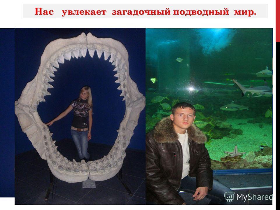 Нас увлекает загадочный подводный мир.