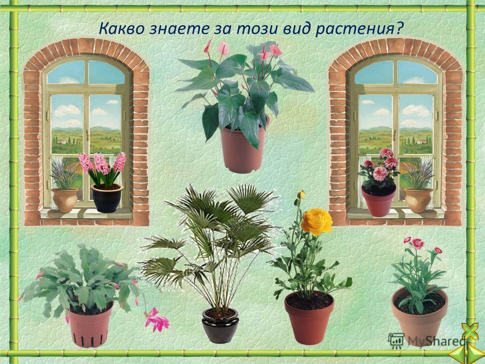 Какво знаете за този вид растения?