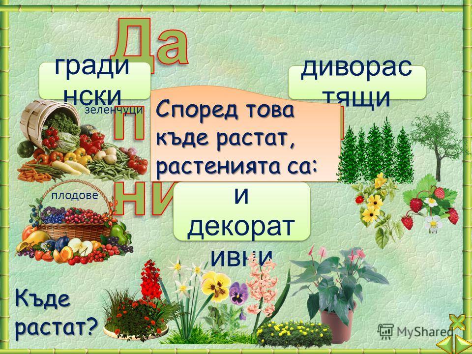 стайни и декорат ивни гради нски диворас тящи Според това къде растат, растенията са: зеленчуци плодове Къдерастат?