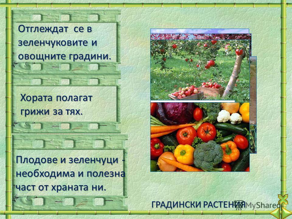 Отглеждат се в зеленчуковите и овощните градини. Хората полагат грижи за тях. Плодове и зеленчуци - необходима и полезна част от храната ни. ГРАДИНСКИ РАСТЕНИЯ