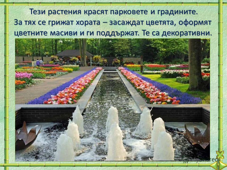 Тези растения красят парковете и градините. За тях се грижат хората – засаждат цветята, оформят цветните масиви и ги поддържат. Те са декоративни.