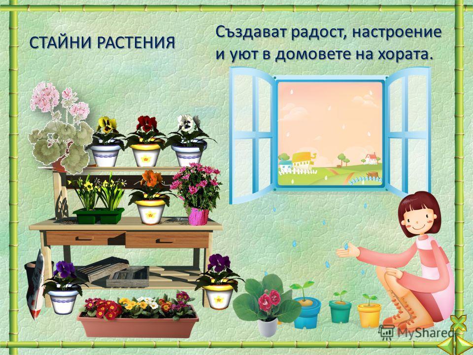 СТАЙНИ РАСТЕНИЯ Създават радост, настроение и уют в домовете на хората.