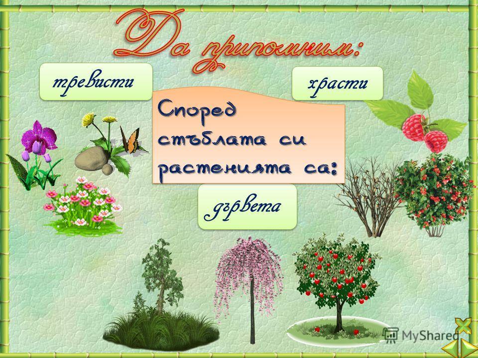 дървета тревисти храсти Според стъблата си растенията са: