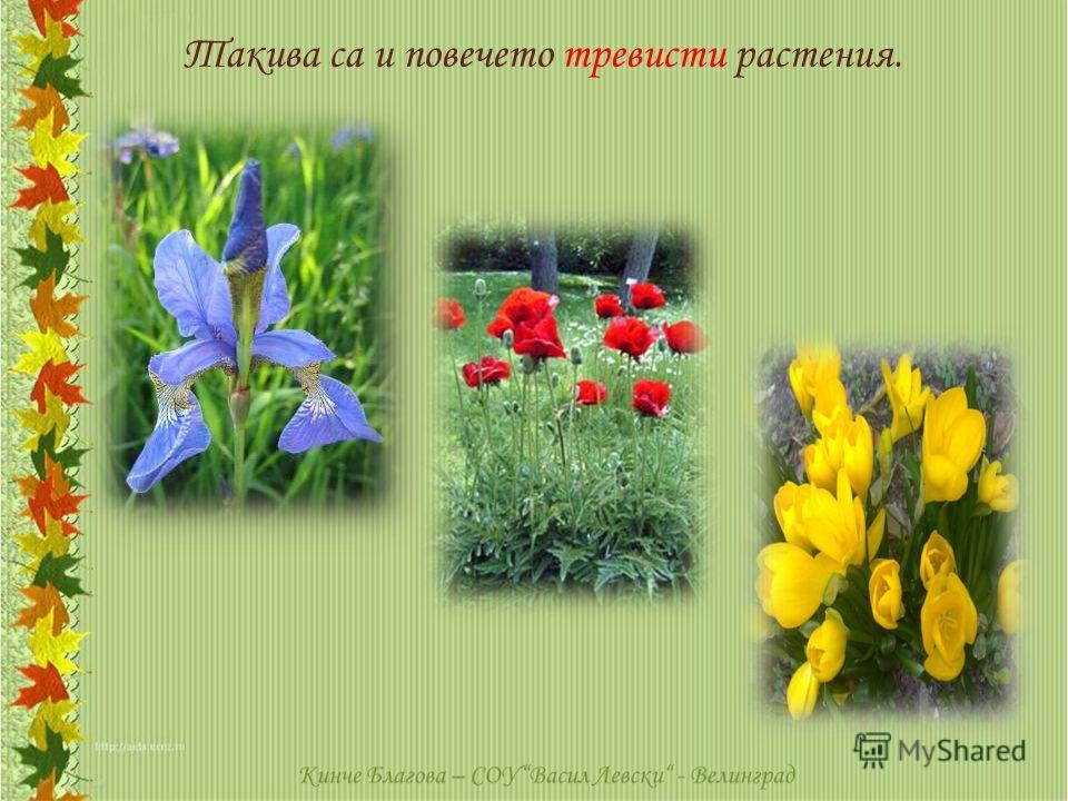 Такива са и повечето тревисти растения.