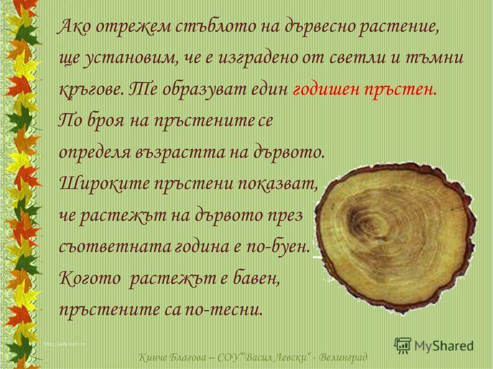 Ако отрежем стъблото на дървесно растение, ще установим, че е изградено от светли и тъмни кръгове. Те образуват един годишен пръстен. По броя на пръстените се определя възрастта на дървото. Широките пръстени показват, че растежът на дървото през съот