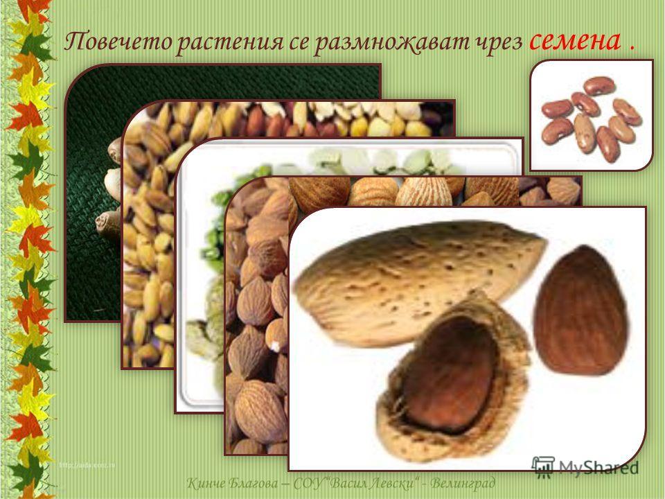 Повечето растения се размножават чрез семена.