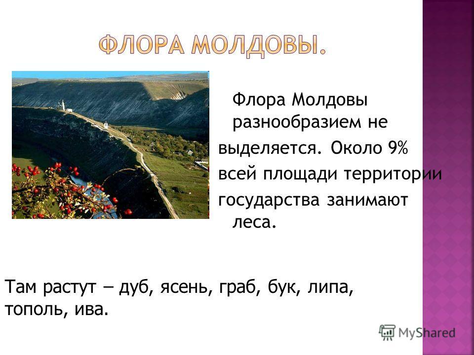 Флора Молдовы разнообразием не выделяется. Около 9% всей площади территории государства занимают леса. Там растут – дуб, ясень, граб, бук, липа, тополь, ива.