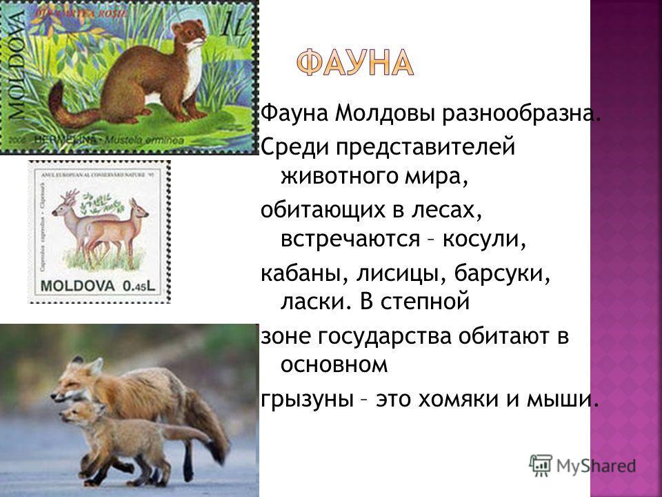 Фауна Молдовы разнообразна. Среди представителей животного мира, обитающих в лесах, встречаются – косули, кабаны, лисицы, барсуки, ласки. В степной зоне государства обитают в основном грызуны – это хомяки и мыши.