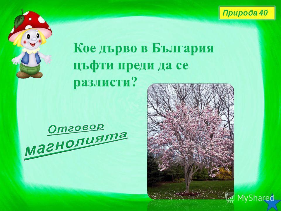Природа 40 Кое дърво в България цъфти преди да се разлисти?