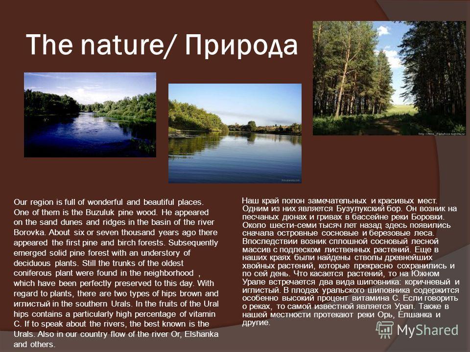 The nature/ Природа Наш край полон замечательных и красивых мест. Одним из них является Бузулукский бор. Он возник на песчаных дюнах и гривах в бассейне реки Боровки. Около шести-семи тысяч лет назад здесь появились сначала островные сосновые и берез