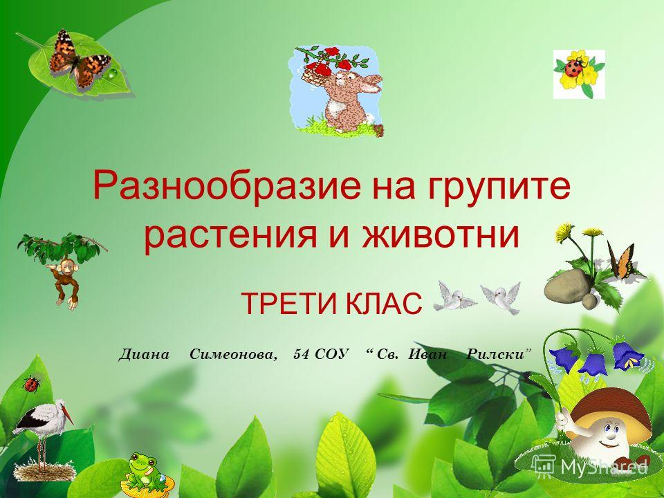 Разнообразие на групите растения и животни ТРЕТИ КЛАС Диана Симеонова, 54 СОУ Св. Иван Рилски