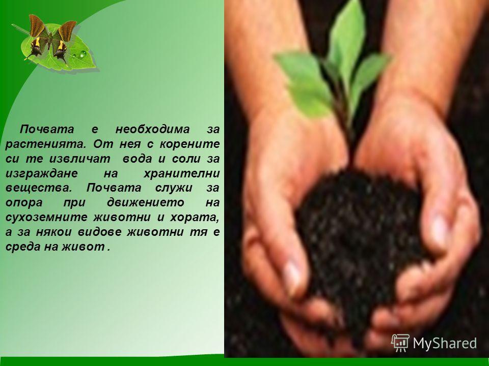 Почвата е необходима за растенията. От нея с корените си те извличат вода и соли за изграждане на хранителни вещества. Почвата служи за опора при движението на сухоземните животни и хората, а за някои видове животни тя е среда на живот.